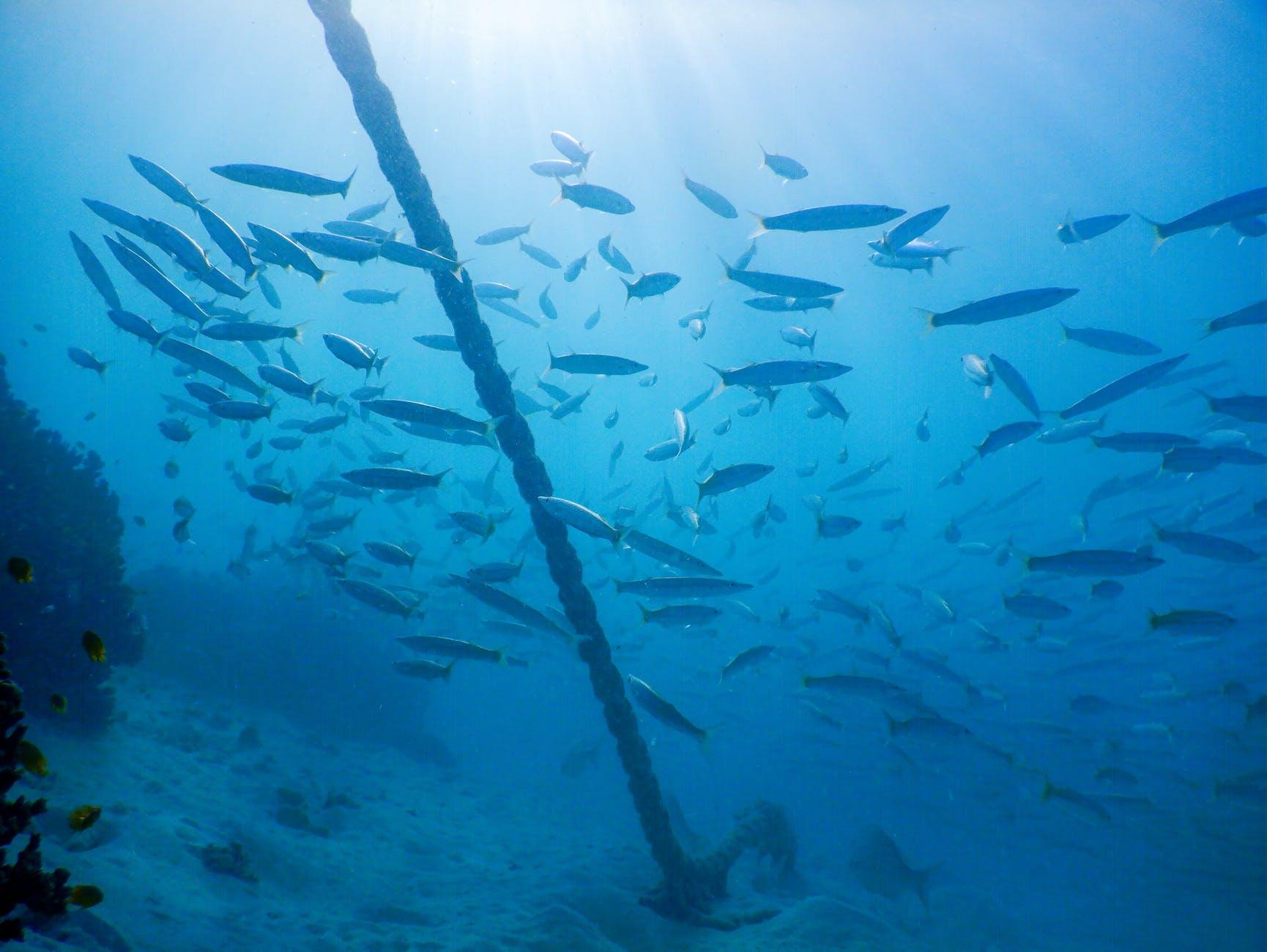 Ankerkette unter Wasser